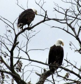 bald eagle, lecompton, first name of lecompton, territorial democratic headquarters, kansas river