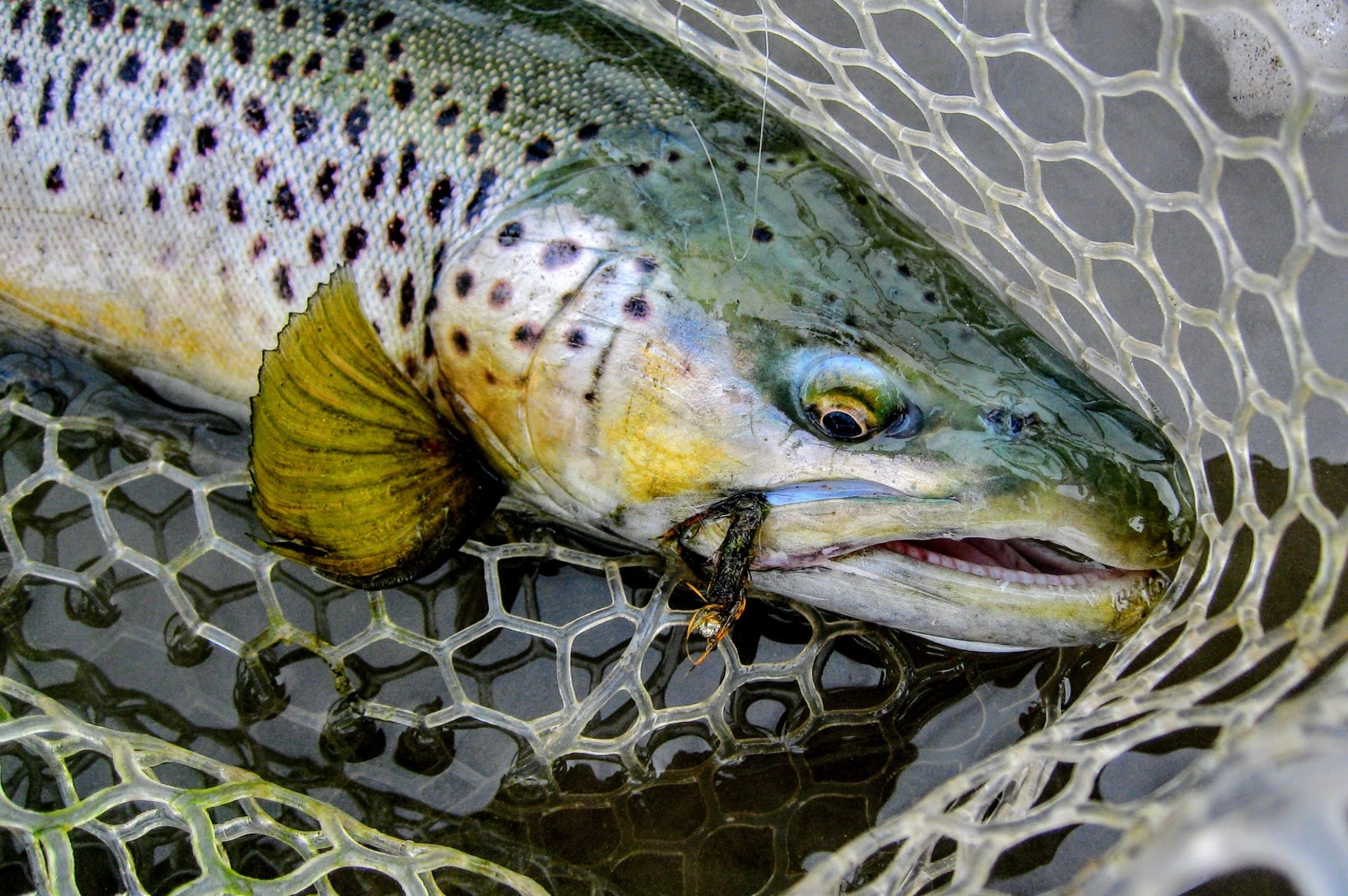 CURRENT SEAMS FLY FISHING