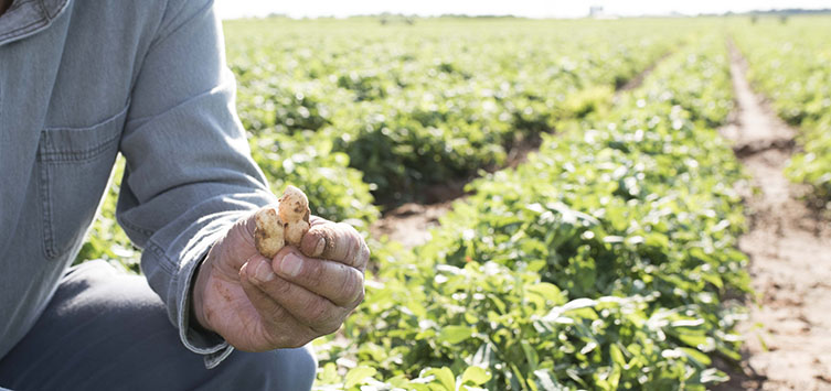 5 Things You Don't Know About Harvesting Peanuts