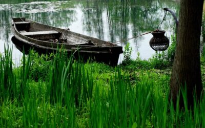 What if your property has a wetland?