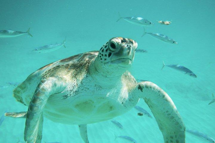 Barbados Turtle & Shipwreck Snorkel Adventure