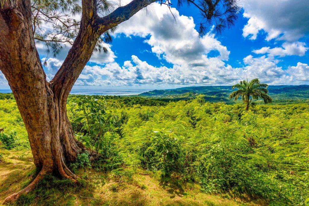 Farley Hill Nation Park Barbados