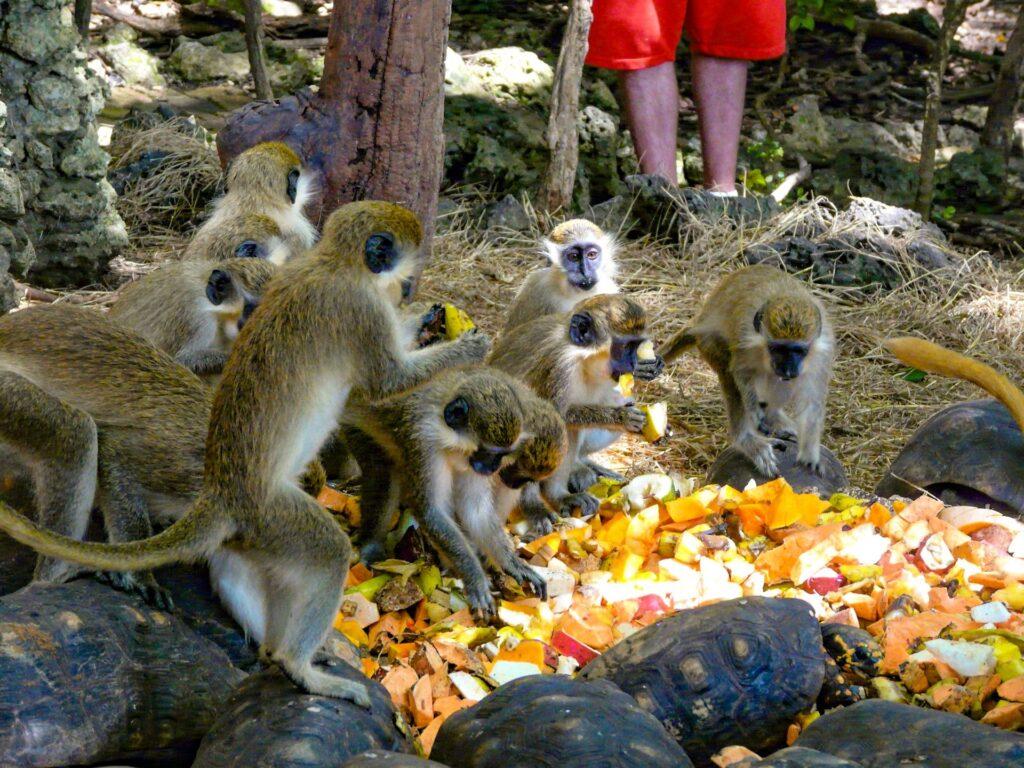 Barbados Wild Life Reserve
