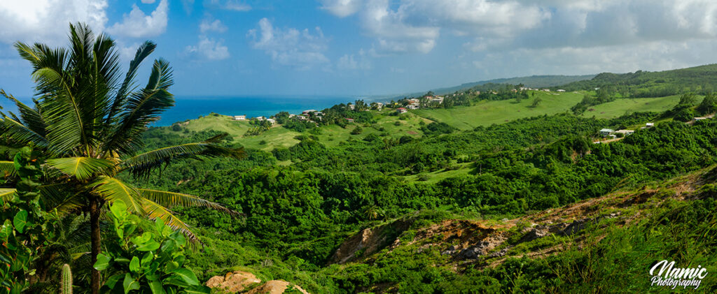 Barbados Landscapes