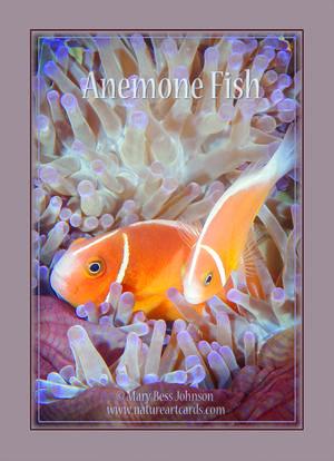 Playing Card - Anemone Fish Back