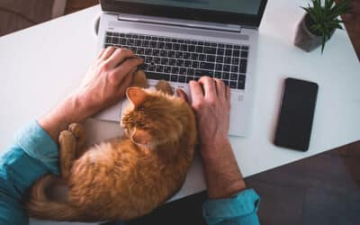 Four Tips for Apartment Living with Pets