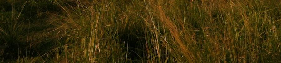 HIMC evening on grass full-width