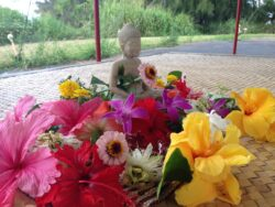 7 Day Self Retreat with Steven Smith @ online