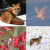 Cards featuring wildlife images