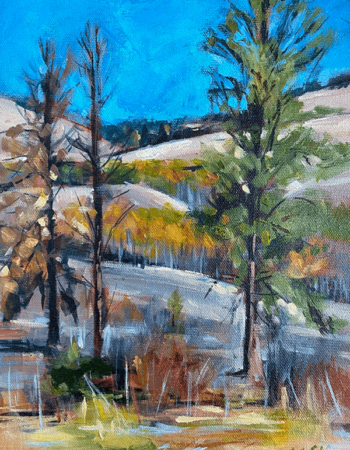 Dappled Fall Forest