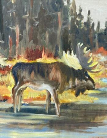 Moose in Fall