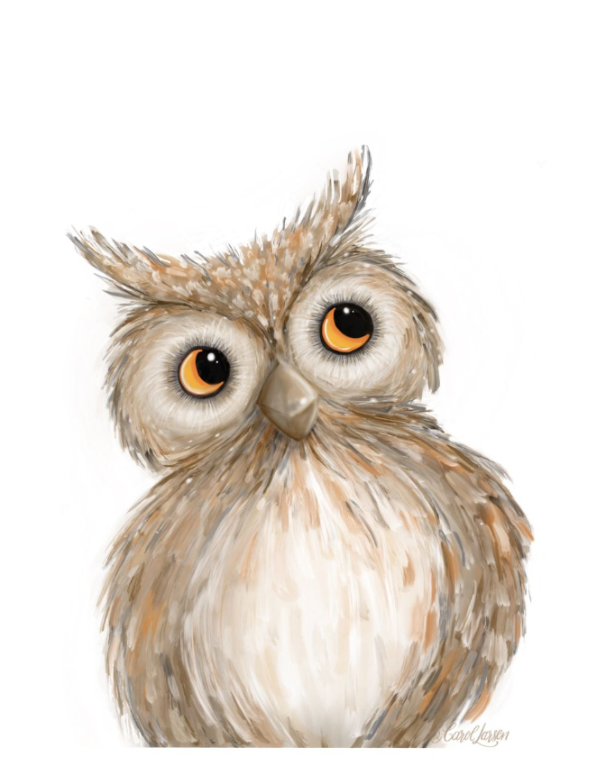 Name-Owl on White Background_Tag-Animals_Collection-All Seasons.
