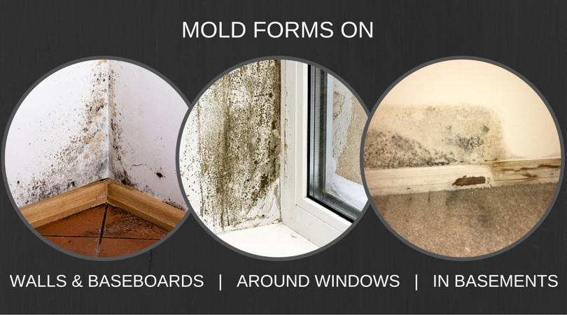 MOLD-FORMS-ON