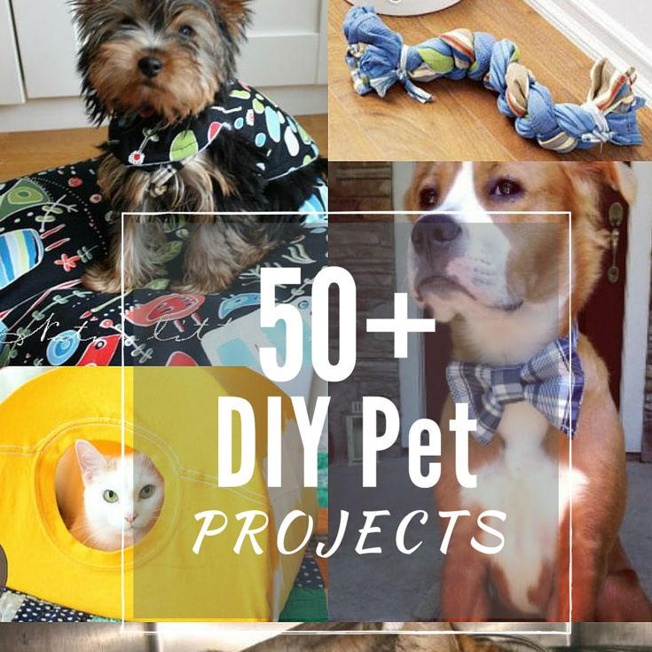 Easy to Make DIY Pet Projects
