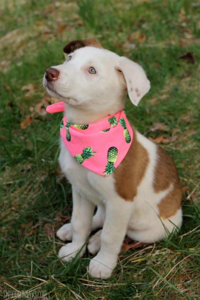 Easy to sew upcycle dog bandana