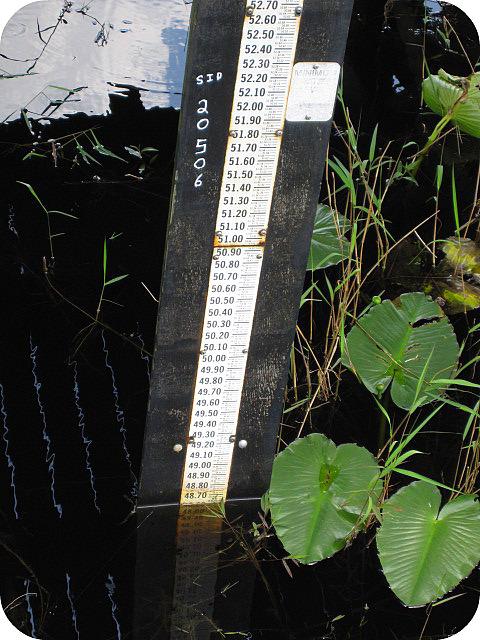 Crews Lake Water Level