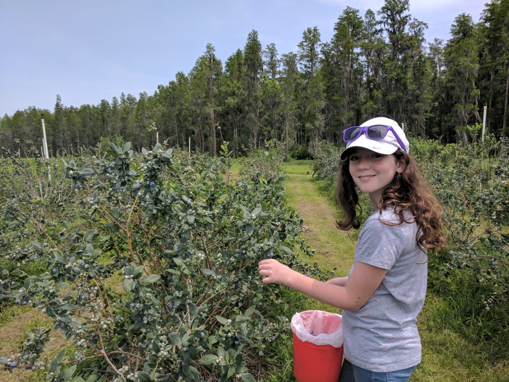 Emmalynn - Blueberry Picking May 2017