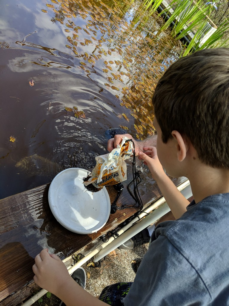 Liam catches water bugs at Camp Bayou.