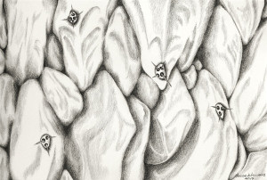 """Close up of a """"grostesque"""" succulent rendered in pencil."""