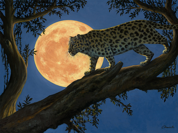 Night Leopard