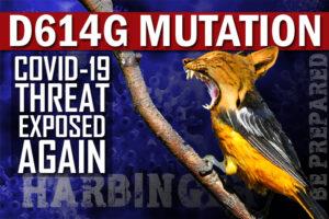 D614G Mutation   Covid-19 Threat Highlighted Again