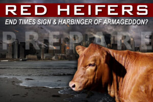 Red Heifer a Harbinger of the End Times—Prepare for Apocalypse?