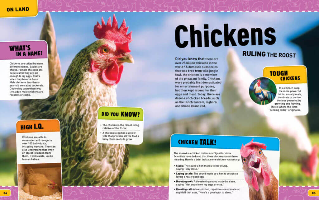 Big Awesome Animals – Chickens | Big Yellow Taxi | Nicolette Cantillo. Big Awesome Animals is a children's book series which educates about different topics. This particular book focused on animals. I contributed this spread when I was a member of the Big Yellow Taxi design team.