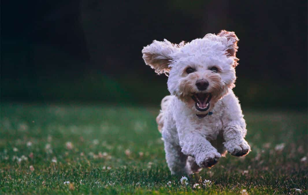 Why Your Pet Will Love Our Pet-Friendly Apartment Community