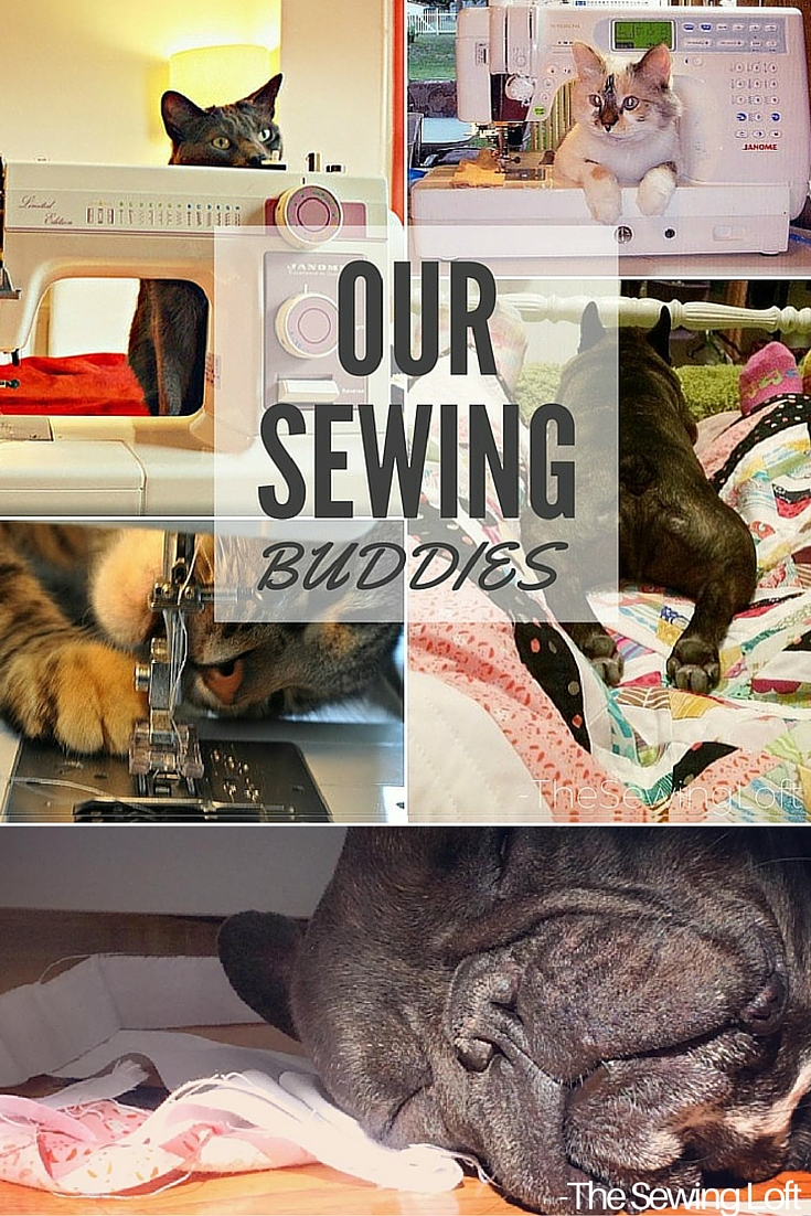 Check out how these four legged sewing buddies keep us in stitches while we sew.