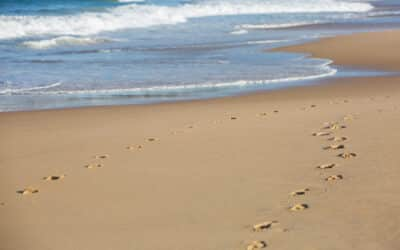 3 Ways You Can Help with Local Beach Maintenance
