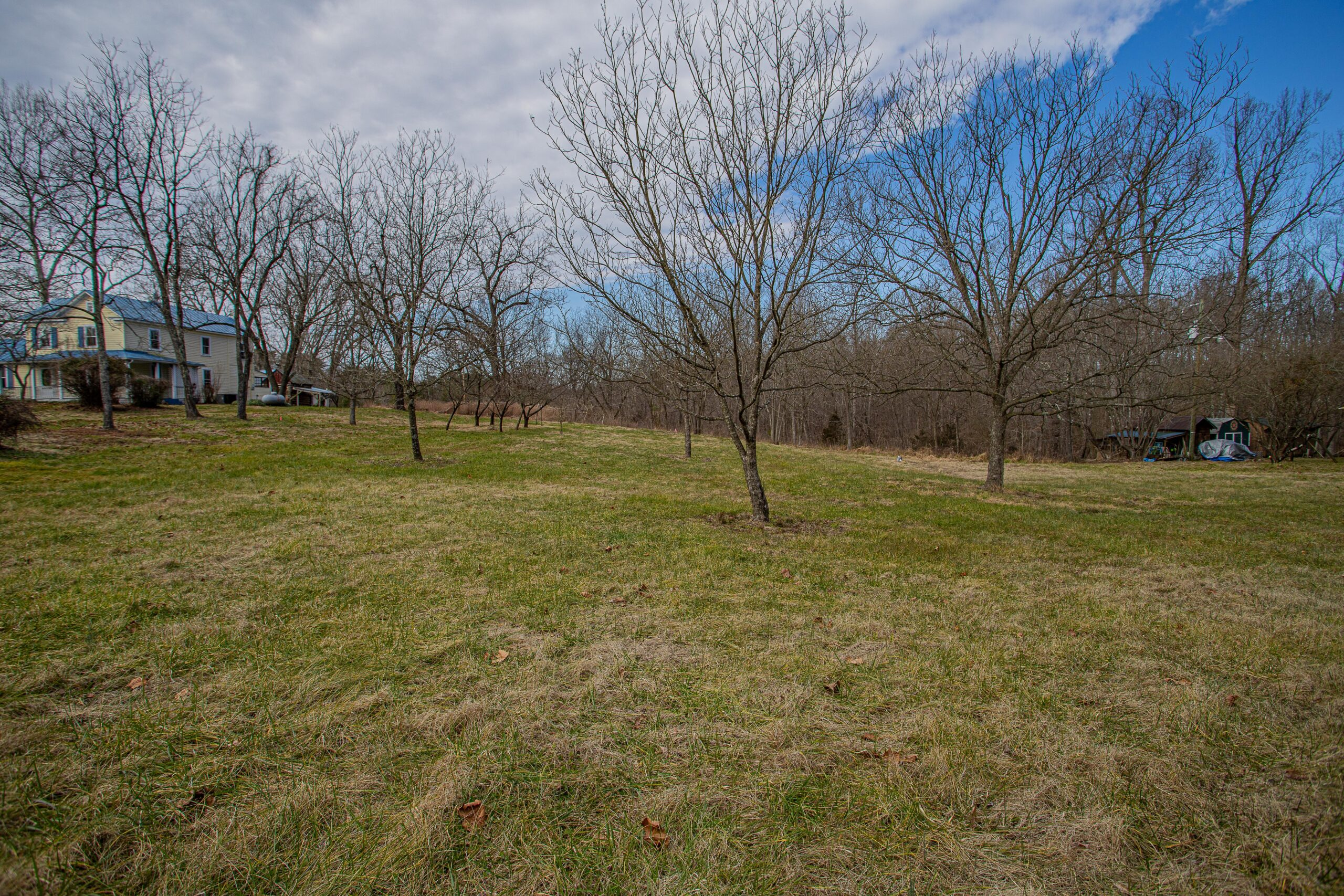 Cleared Lot with Fruit Trees in Pittsylvania County!