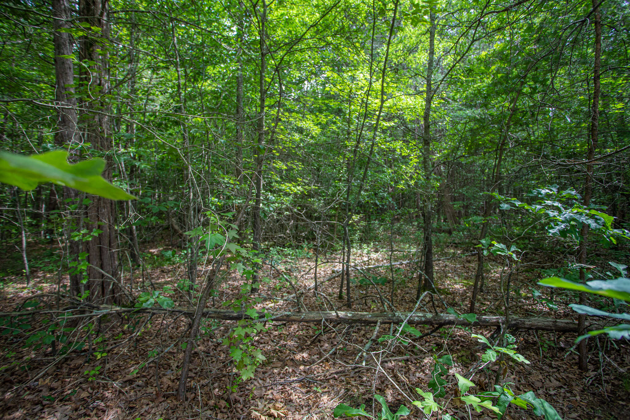 5 Wooded Acres on a Quiet County Road, Green Town Road in Prince Edward