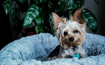 Make Our Pet-Friendly Apartments Feel Like Home for Your Pets