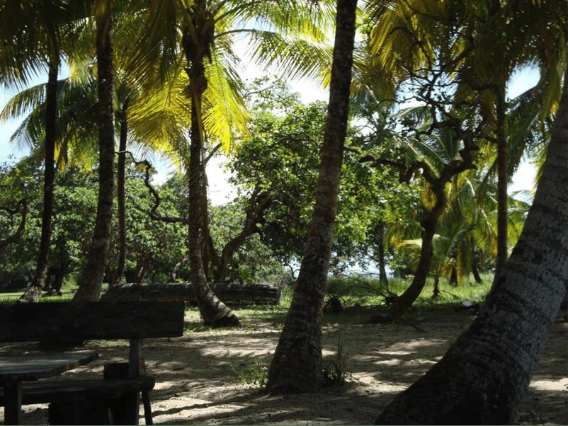 Hometown : Focus sur Saint-Laurent-du-Maroni, en Guyane française