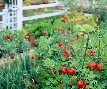 Tips for Starting a Garden in the Fall
