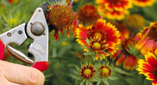 Proper Shrub Maintenance for Colorado Gardens