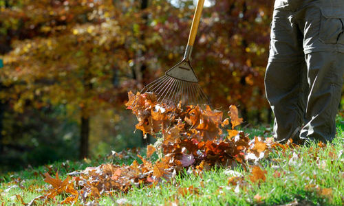 Why Fall Leaves are Your Garden's Best Friend