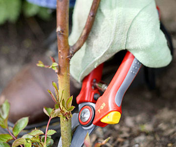 October is a Time for Pruning