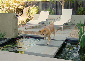Can Your Dog Dig It? Pet Inspired Gardens & Landscapes