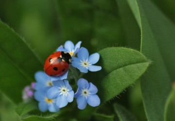 Eco-Friendly Pest Control with Integrated Pest Management