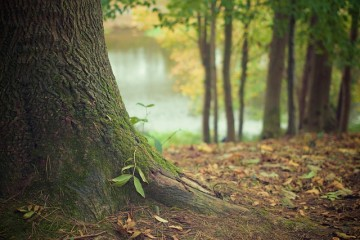Grow Brilliant Trees with Natural Mulch from the Yard