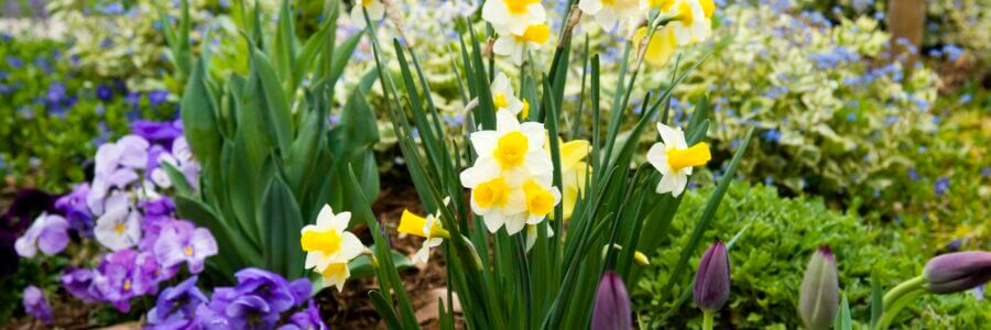 It's time to plant tulips, daffodils and other bulbs for beautiful spring color.