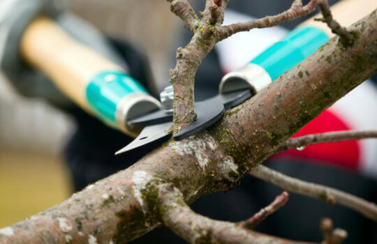 Top Four Reasons to Prune Trees and Shrubs in the Winter + Pruning Tips