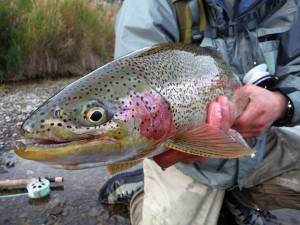 Get access to over 30 rivers and streams at No See Um for fly fishing.
