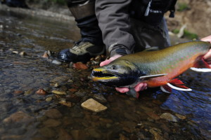 Artic Char Fly Fishing