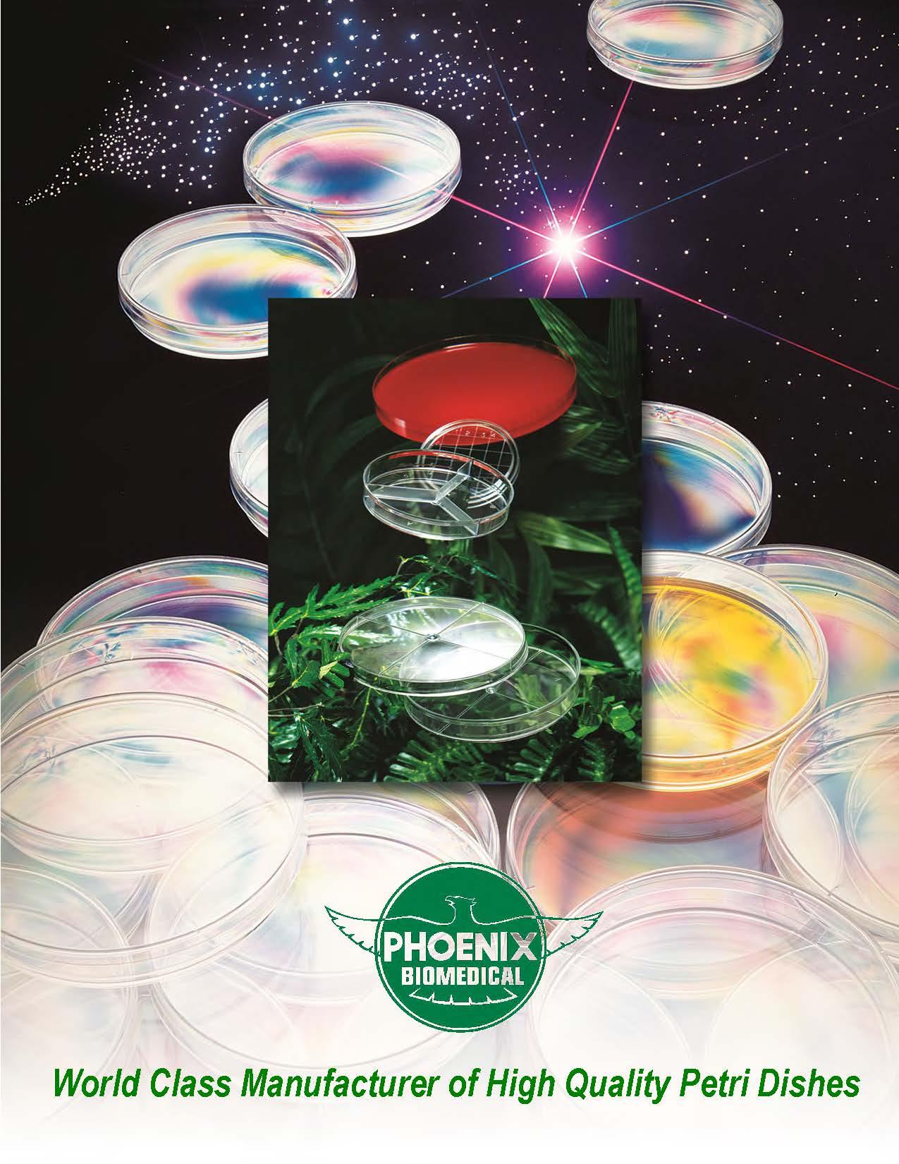 Phoenix Brochure (English)