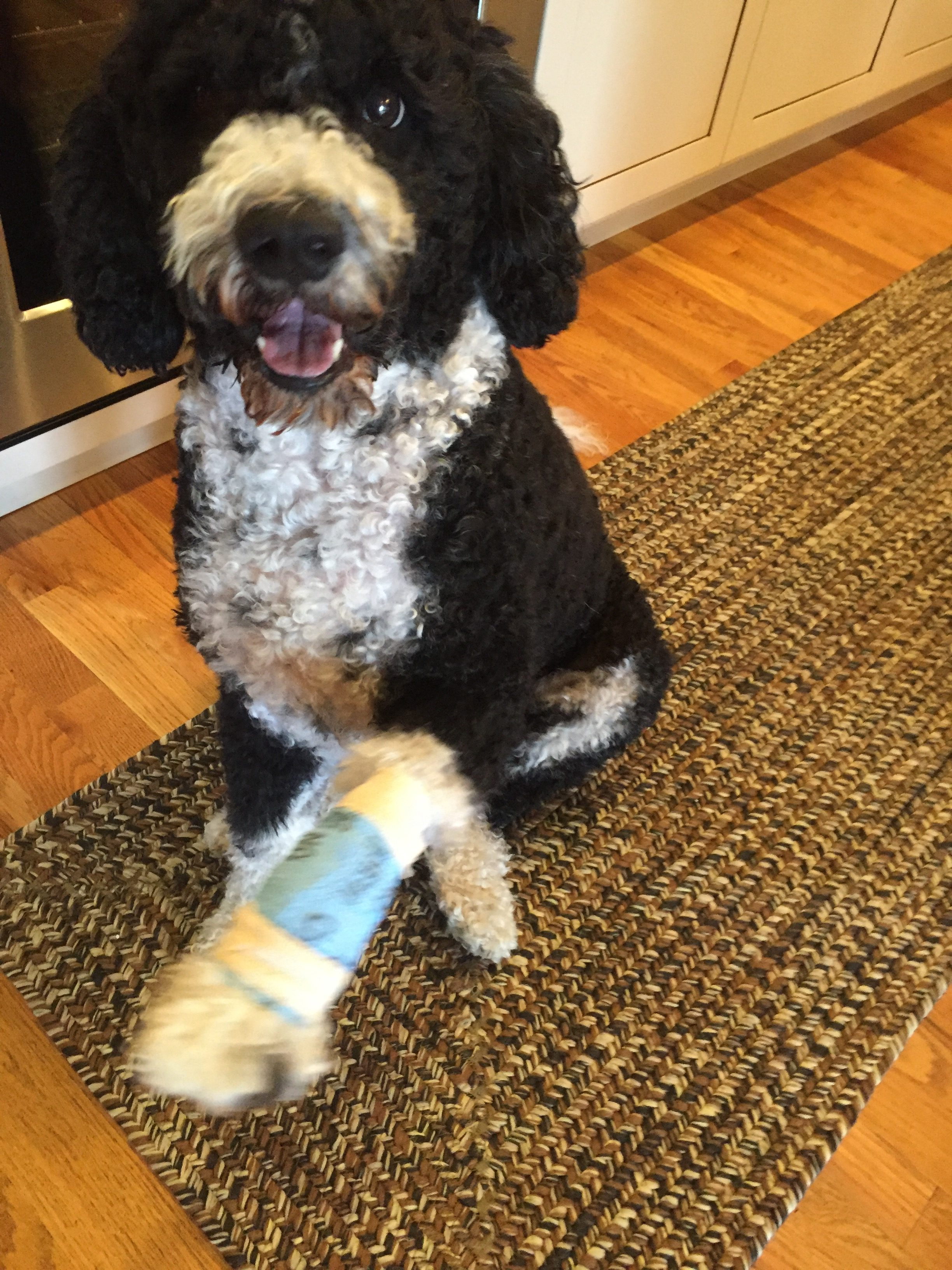 Dog First Aid Kit - My PWD and Me - Miss Millie