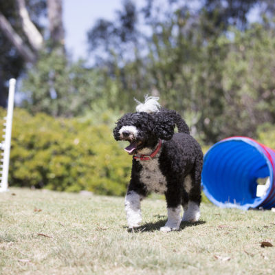 5 Outdoor Dog Games - My PWD and Me