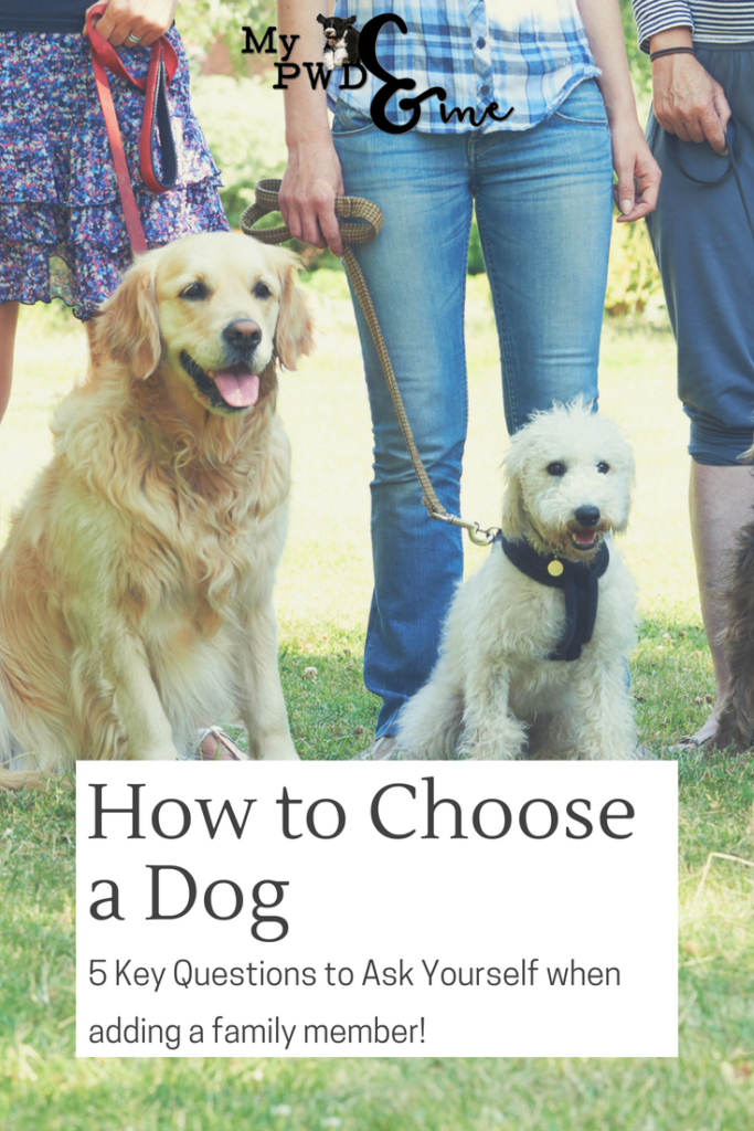 how to choose a dog - My PWD and Me