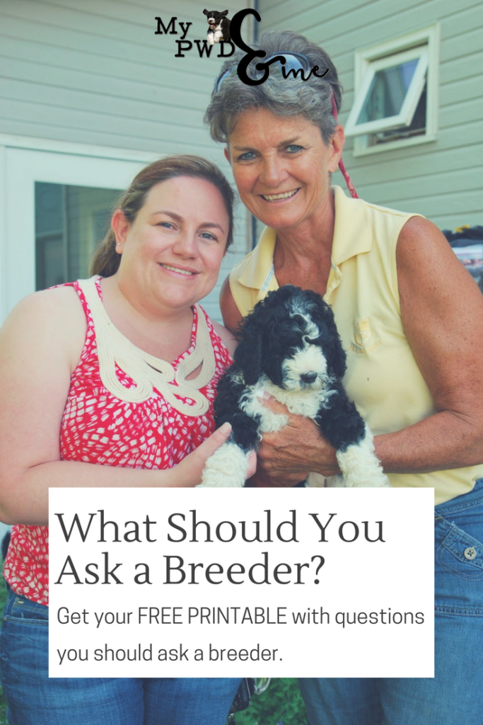 Questions You Should Ask A Breeder - My PWD and Me